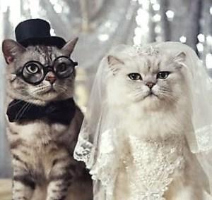 cats-dress