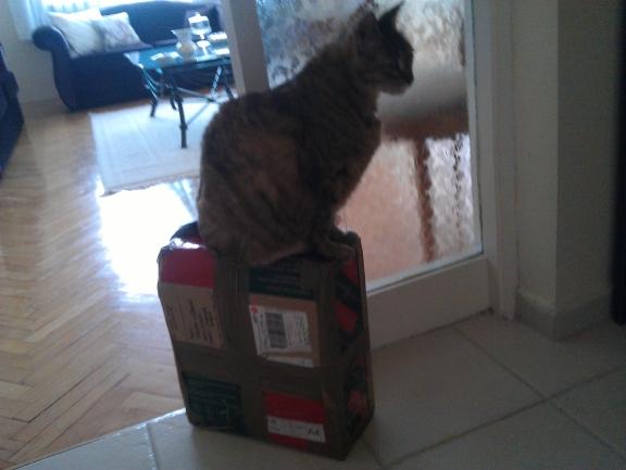 leo kargo paketi ile